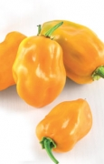 PEPERONE PICCANTE Habanero Orange