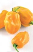 PEPERONE PICCANTE Habanero Orange