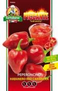 Peperoncino habanero red caribbean