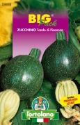 ZUCCHINO Tondo di Piacenza