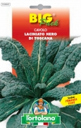CAVOLO Laciniato nero di Toscana