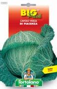 CAVOLO Verza di Piacenza