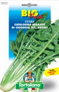CICORIA Catalogna gigante di Chioggia sel. Ascoli