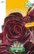 CICORIA Rossa di Verona sel. Grumolo Rosso