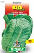 LATTUGA ROMANA Verde degli ortolani