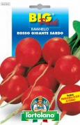 RAVANELLO Rosso Gigante Sardo