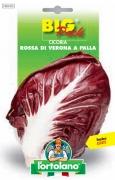 CICORIA Rossa di Verona a palla