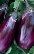 MELANZANA Seta (mezza lunga violetta)