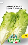 INDIVIA SCAROLA Cornetto di Bordeaux