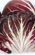 CICORIA Rossa di Chioggia 6 Sel. Pompeo (tardivo)