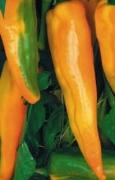 PEPERONE DOLCE Corno di Toro Giallo