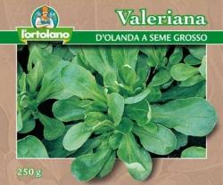 VALERIANA d'Olanda a seme grosso
