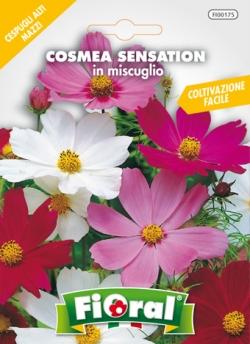 COSMEA SENSATION IN MISCUGLIO