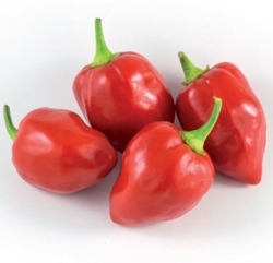 PEPERONE PICCANTE Habanero Red