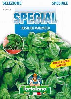 BASILICO Mammolo