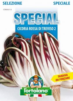 CICORIA Rossa di Treviso 2 (Tardiva da Forzare)