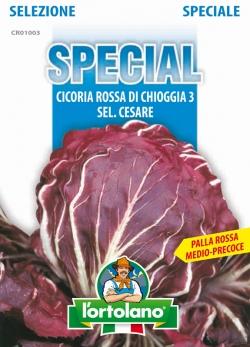CICORIA Rossa di Chioggia 3 sel.Cesare (Medio/Precoce)