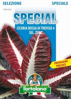 CICORIA Rossa di Treviso 4 sel. Zero