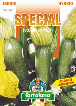 ZUCCHINO Giambo F1