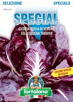 CICORIA Rossa di Verona sel. Cologna Tardiva