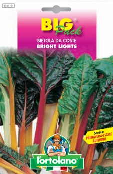 BIETOLA DA COSTE Bright lights