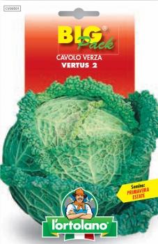 CAVOLO Verza Vertus 2