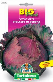 CAVOLO Verza Violaceo di Verona