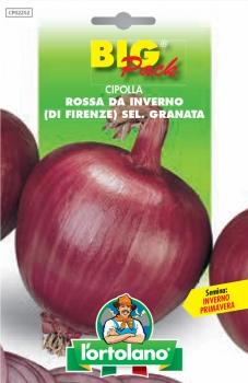 CIPOLLA Rossa da Inverno (di Firenze) Sel. Granata
