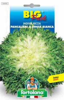 INDIVIA Riccia Pancalieri a costa bianca
