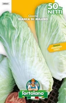 CICORIA Bianca di Milano