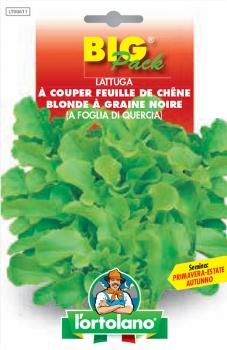 LATTUGA à couper feuille de chêne blonde à graine noire (a foglia di quercia)