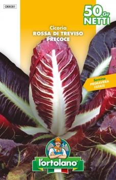 CICORIA Rossa di Treviso precoce