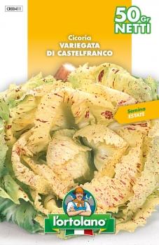 CICORIA Variegata di Castelfranco