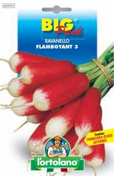 RAVANELLO Flamboyant 3