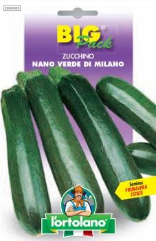 ZUCCHINO Nano verde di Milano