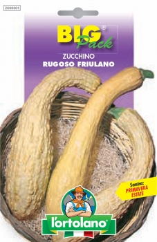 ZUCCHINO Rugoso Friulano