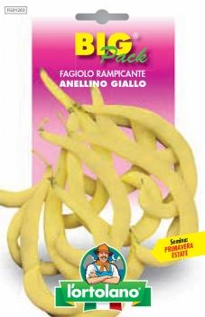 FAGIOLO rampicante Anellino Giallo
