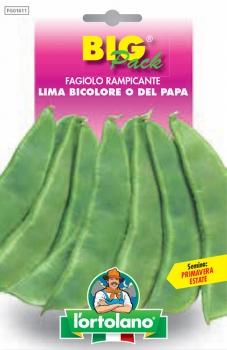 FAGIOLO Lima bicolore o del Papa
