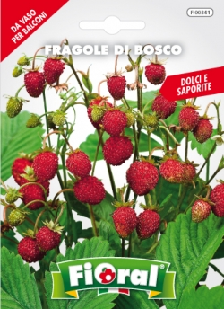 FRAGOLE DI BOSCO