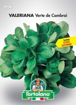 VALERIANA Verte de Cambrai