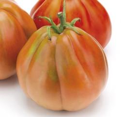 POMODORO Silvano F1 (tipo Red Pear)