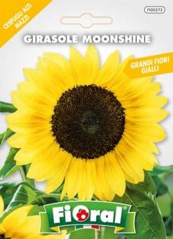 GIRASOLE MOONSHINE