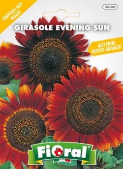 GIRASOLE EVENING SUN