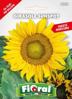 GIRASOLE SUNSPOT