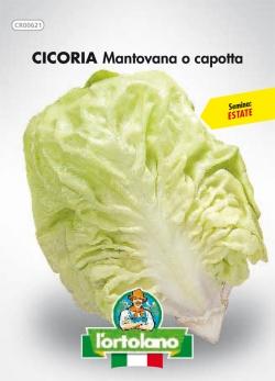 CICORIA Mantovana o capotta
