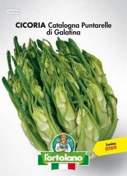 CICORIA Catalogna Puntarelle di Galatina