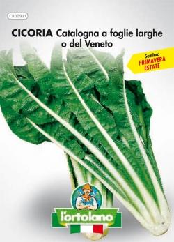 CICORIA Catalogna a foglie larghe o del Veneto