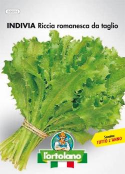 INDIVIA Riccia romanesca da taglio