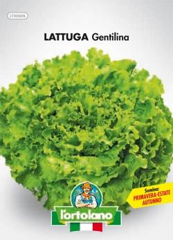 LATTUGA Gentilina