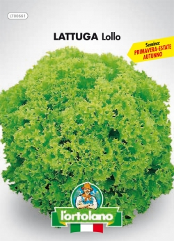 LATTUGA Lollo